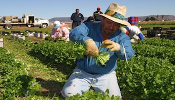 Food Prices and Arizona Agriculture Economy Tied to Labor Reform