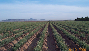 Arizona Agriculture is an Engine of Innovation!
