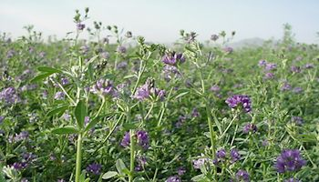 Key Herbicide's use in Arizona Agriculture Has Proven Track Record