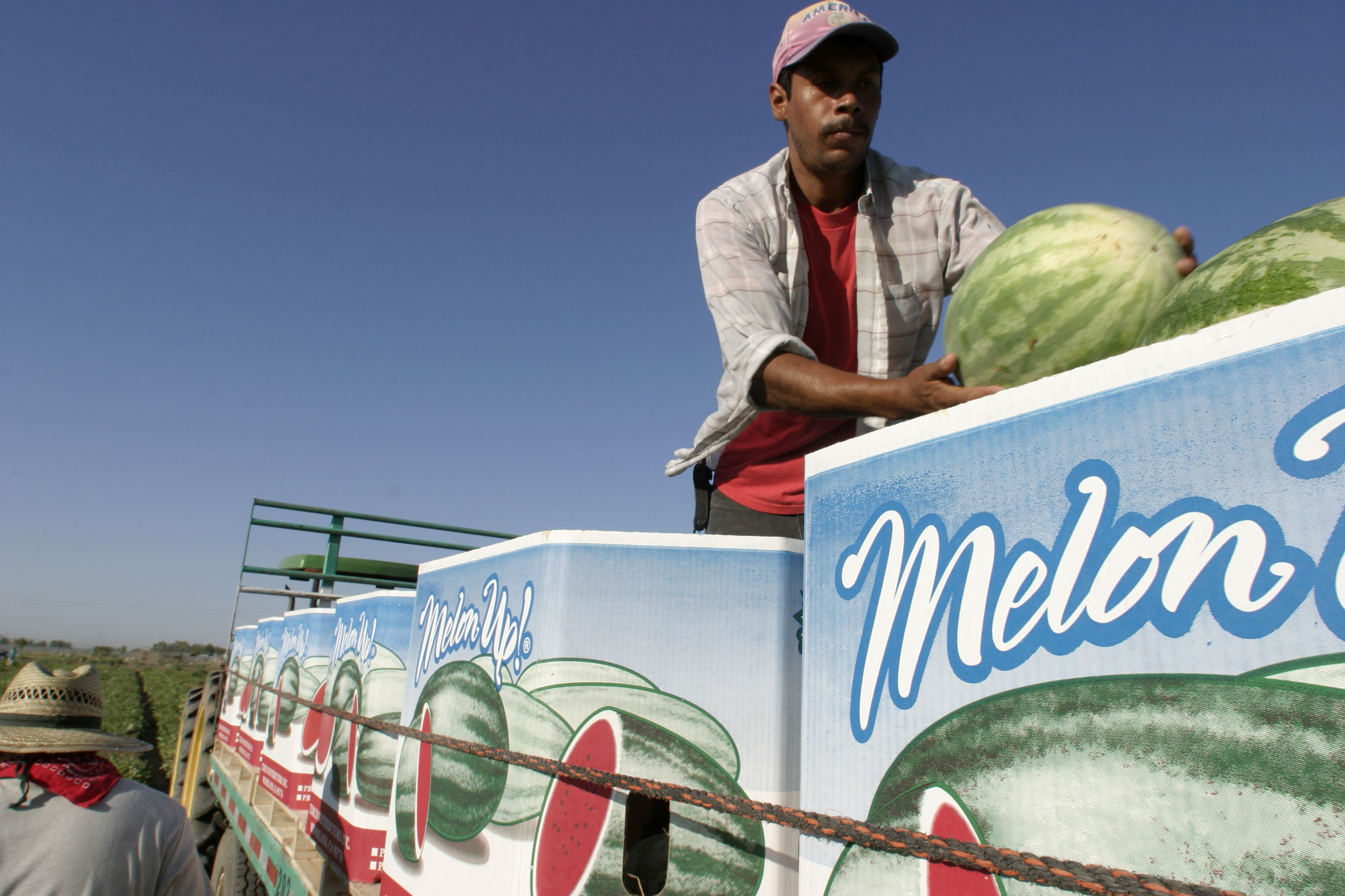 Arizona Is Good At Growing Melons All cantaloupes produced in california are grown in regions where the weather is hot and dry. arizona is good at growing melons